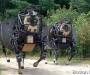 boston dynamics роботы